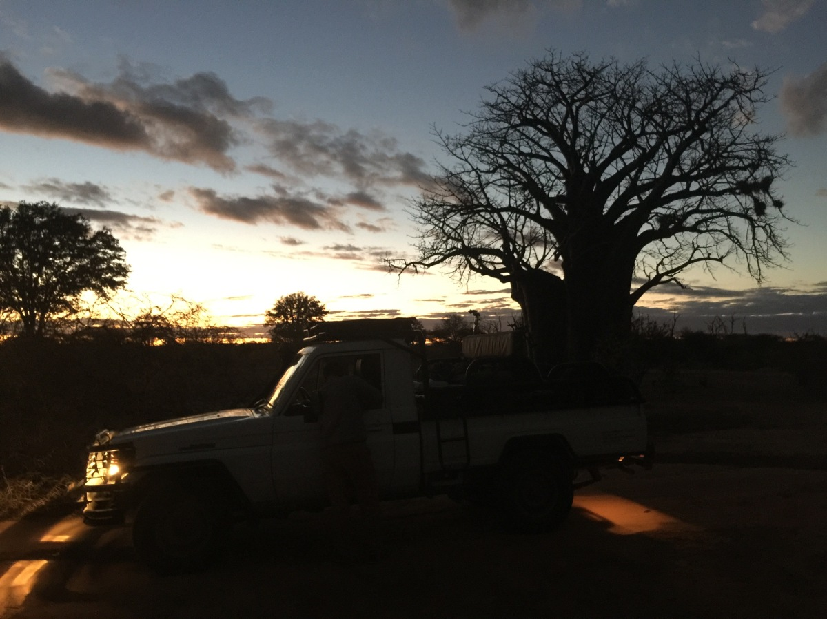 Baobab, Sunset, Zimbabwe, Africa, Flying Camera Company, Drone, Filming, Natural History,