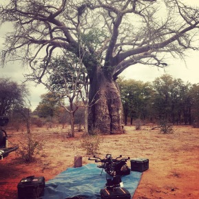 Alta 8, Freefly systems, Baobab tree, Movi M15, Red Weapon, UAV, Heavy lift, Zimbabwe, Africa, Flying Camera Company, Drone, Filming, Natural History,